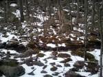The rock trail at Ward Pound Ridge