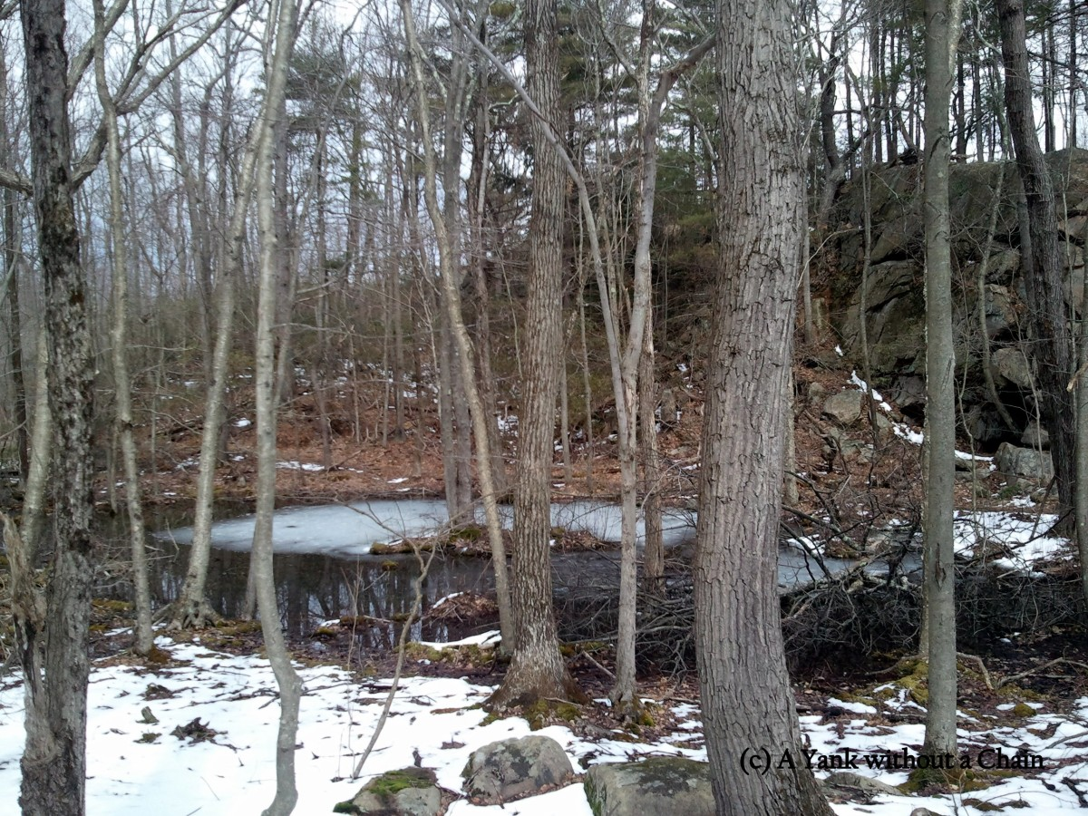 A pond at Ward Pound Ridge