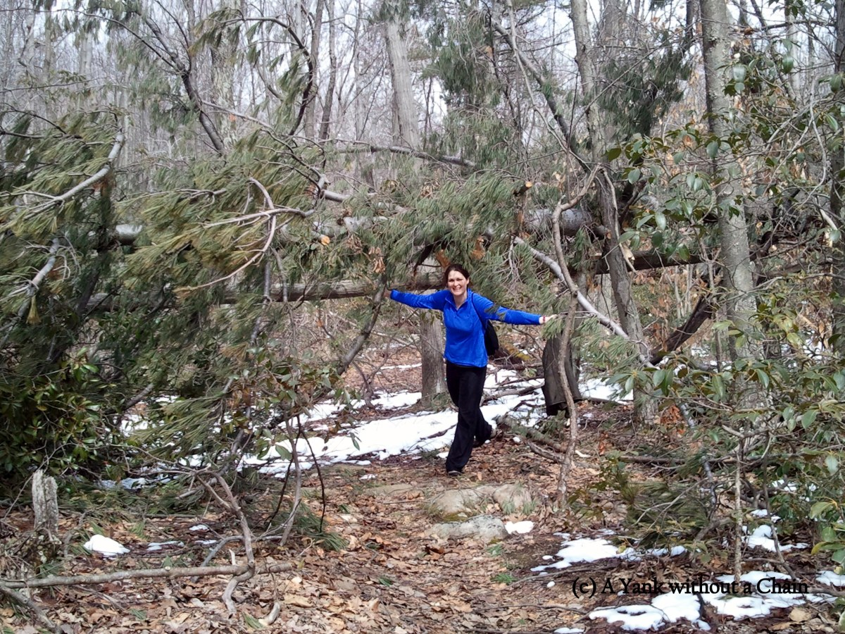Dori and a downed tree at Ward Pound Ridge