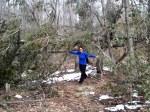 Dori and a downed tree at Ward Pound Ridge
