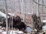 Split trees framing a river at Ward Pound Ridge