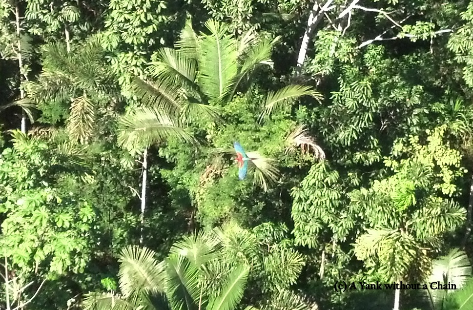 We visited a huge Macaw nest and saw a dozen birds playing in the treetops.