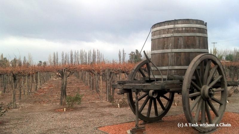 The Rutini vineyard with a wine-transporting bucket