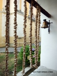 Garlic hung out to dry at Grgeteg