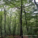 The woods in Cisnadioara