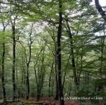 The woods in Cisnadioara