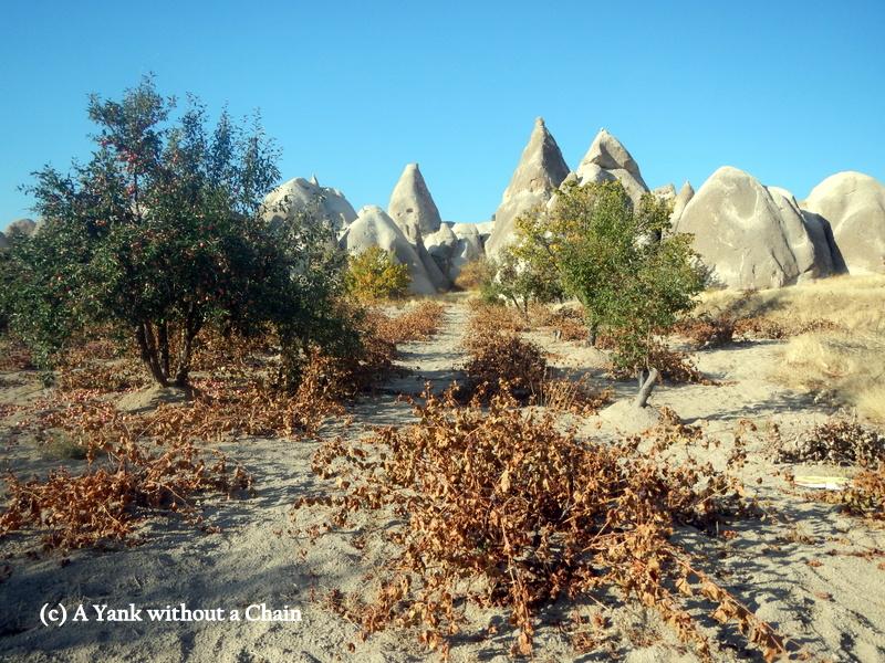 Views of some of the abundant vineyards in Cappadocia