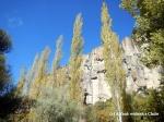 Poplar trees in the Ihlara Valley