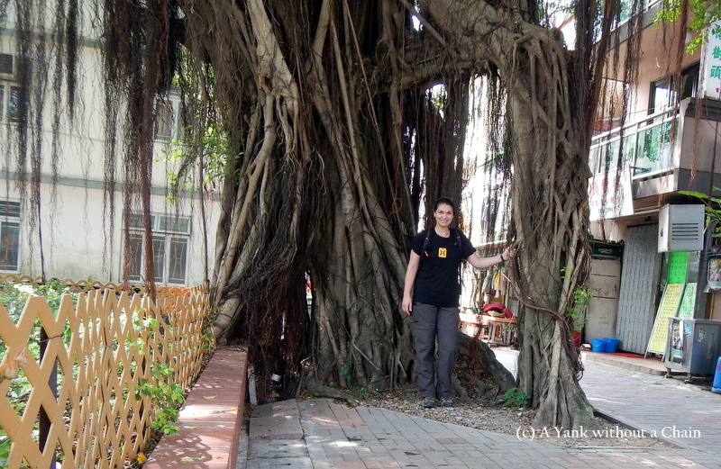 These amazing trees were everywhere in Hong Kong!