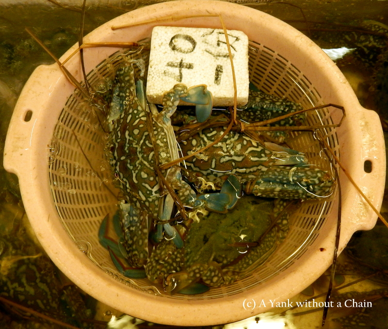 Live crabs at the Mui Wo wet market