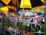 Orchids for sale in Hue