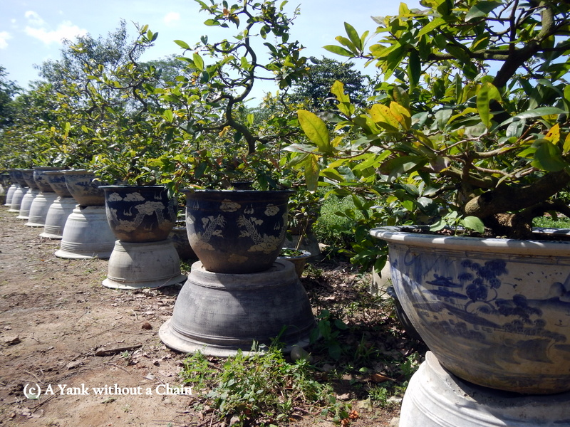 Potted plants inside the imperial citadel in Hue