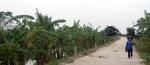 A woman walking among banana trees near Ninh Binh