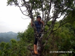 My hiking guide in a tree at Cat Ba National Park
