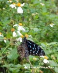 A butterfly in Cat Ba National Park