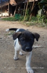 A puppy at Ban Houay Thong Village