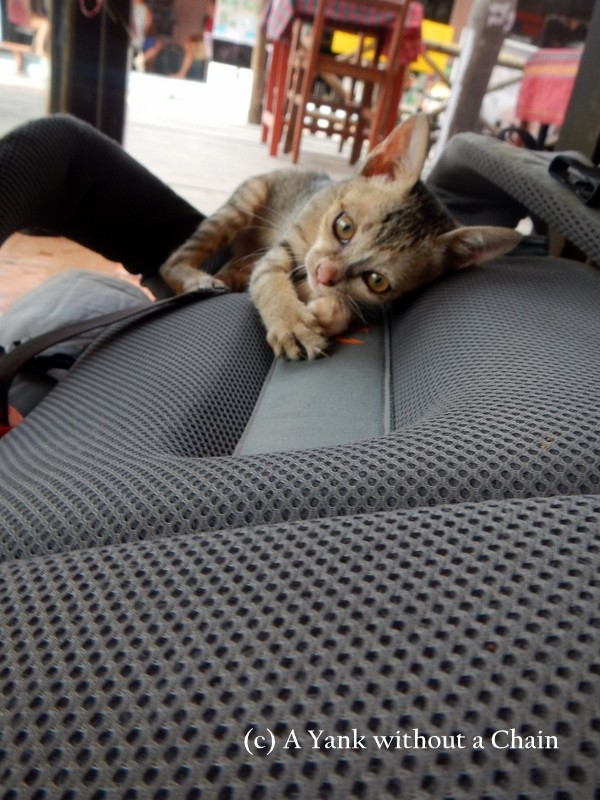 A kitten making a home on my backpack on Don Det
