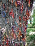 Bracelets adorn the Killing Tree at the Killing Fields near Phnom Penh