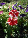 Red and blue flowers at Buphing Palace