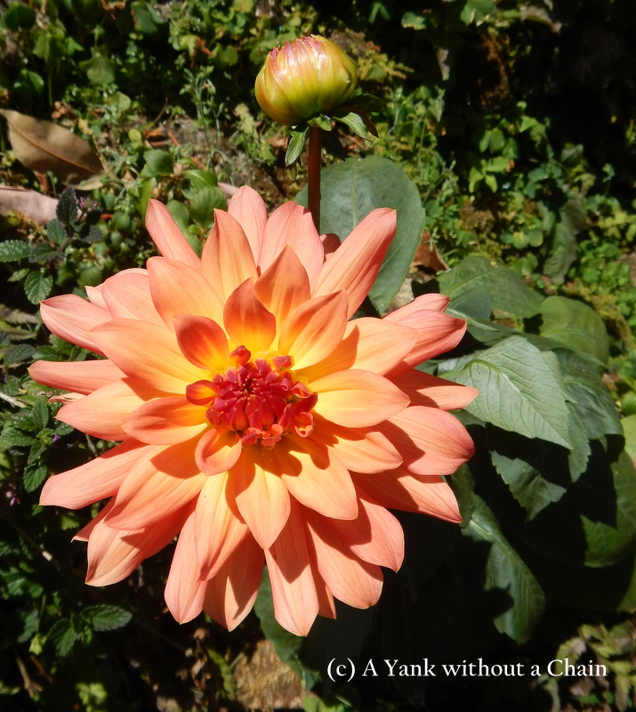 An orange flower and a bud at Buphing Palace