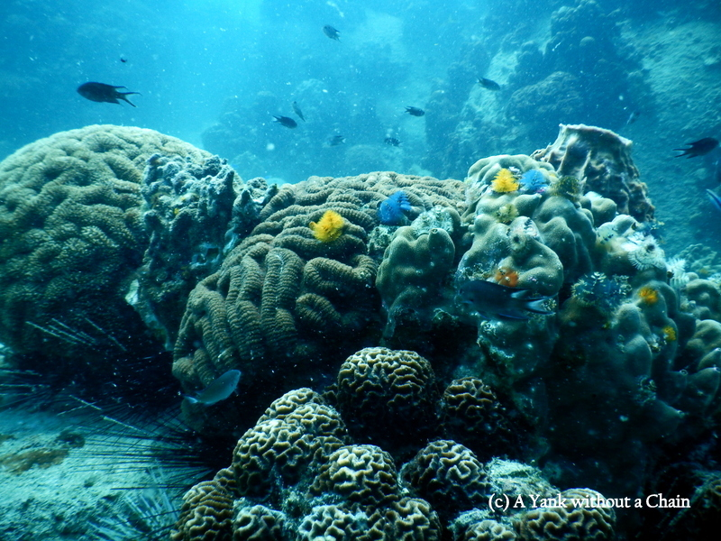 A section of the reef at the Twins dive site in Koh Tao