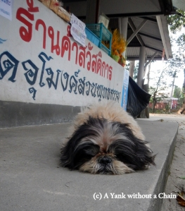 One of the many friendly dogs that hangs around Wat Umong