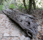 A log at Khao Sok National Park