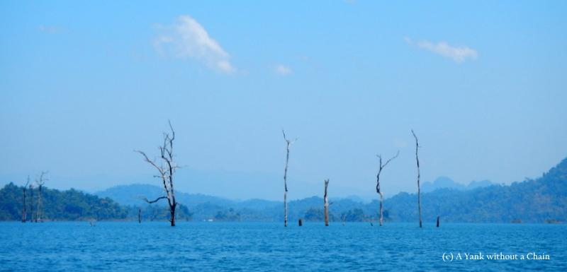 Petrified trees, part of the sunken rainforest at Chiew Lan Lake