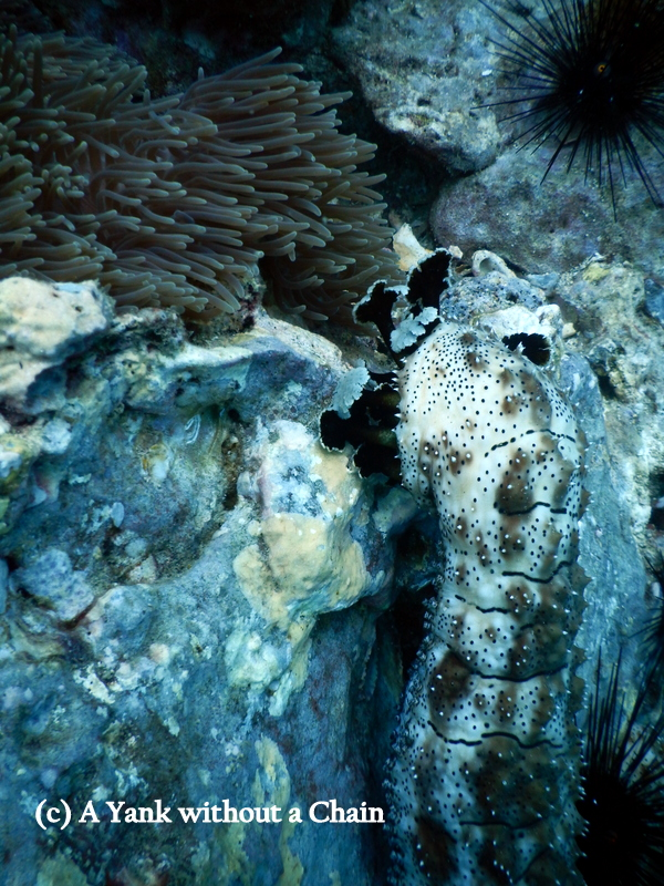 A sea cucumber's impressive tentacles at Shark Point