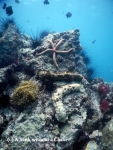 Sea cucumbers and a sea star at anemone reef
