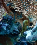 A tigertail seahorse at Anemone Reef