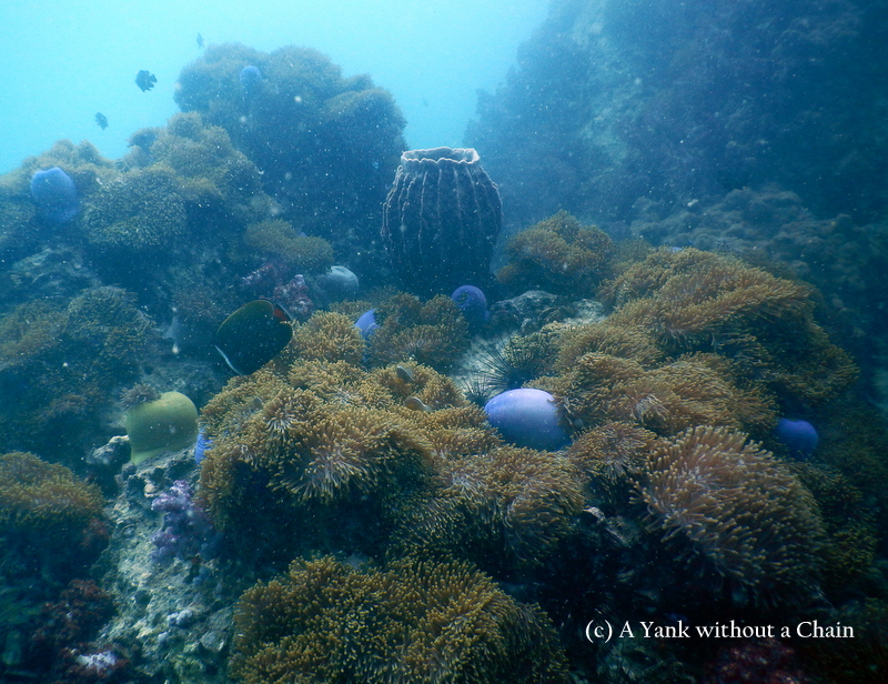 A small barrel sponge and soft corals at Anemone Reef