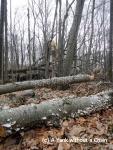 Tree stumps covered in fungi at Devil's Den