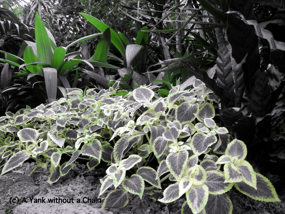 Leaves at the Conservatory in Fitzroy Gardens (selective color feature)