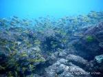 The teeming reef at Shag Rock