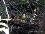 A beautiful green bird at Great Sandy National Park