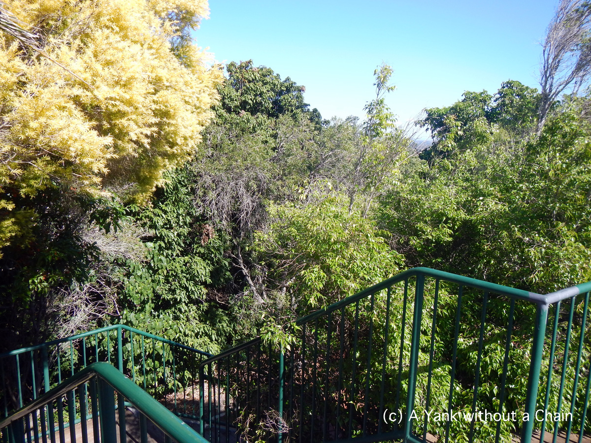 The walkway at the Hummock Lookout