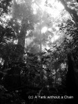 """The cloud forest viewed from the """"Sky Window"""" walking path at Eungella National park"""