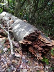 A log at on the Granite Bend path