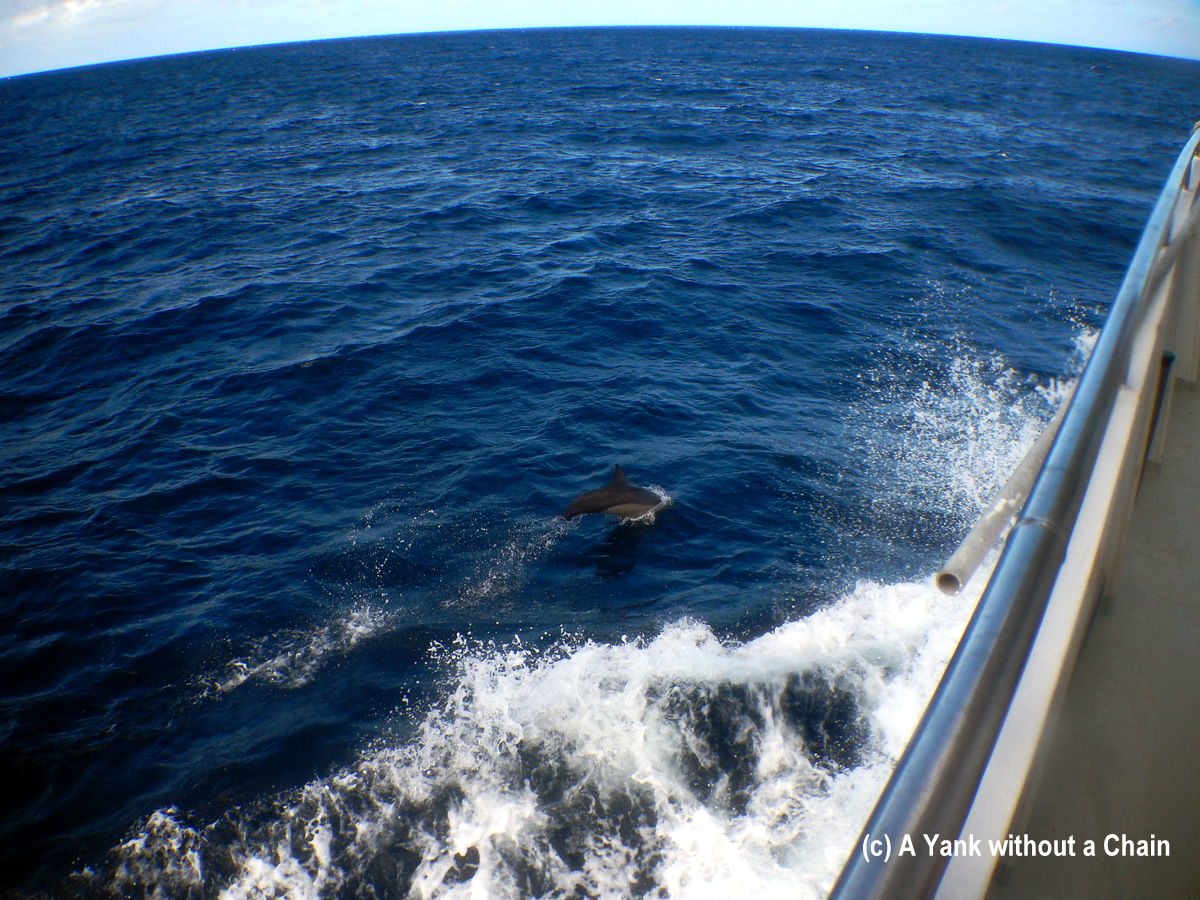 A dolphin jumping alongside the Taka boat