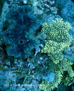 A giant clam and some vibrant yellow coral at Pixie's Pinnacle