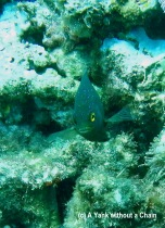A curious damselfish at Taka Range