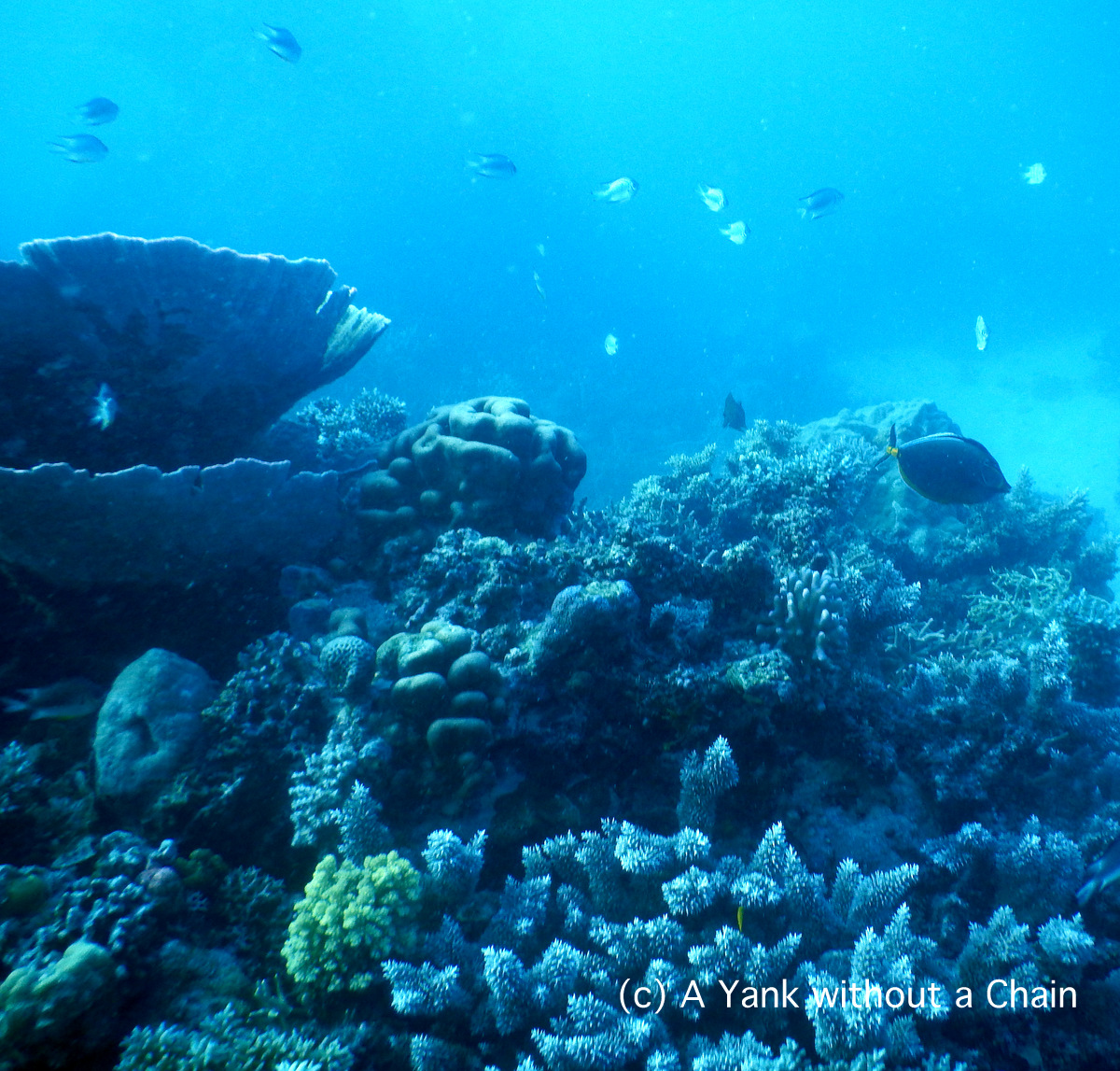 The reef at Princess Bommie