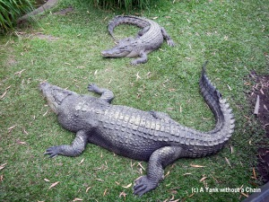 Gigantic estuarine crocodiles at Cairns Tropical Zoo