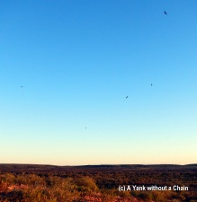 Hawks flying at sunset near Kings Canyon