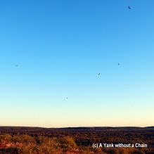 Hawks flying at sunset near Kings Canyon