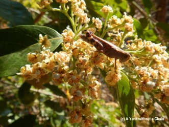 A lovely cricket sitting on some lovely flowers on the Wangi Loop walk at Litchfield National Park