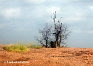 A tree growing from the top of Enchanted Rock